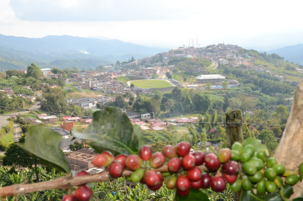 Eje Cafetero view